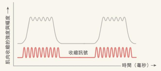 盆底肌緊緻修復 screenshot drive.google.com 2020.07.01 08 08 01